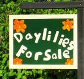 01-Daylilies-For-Sale