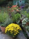 potted-herbs-annuals